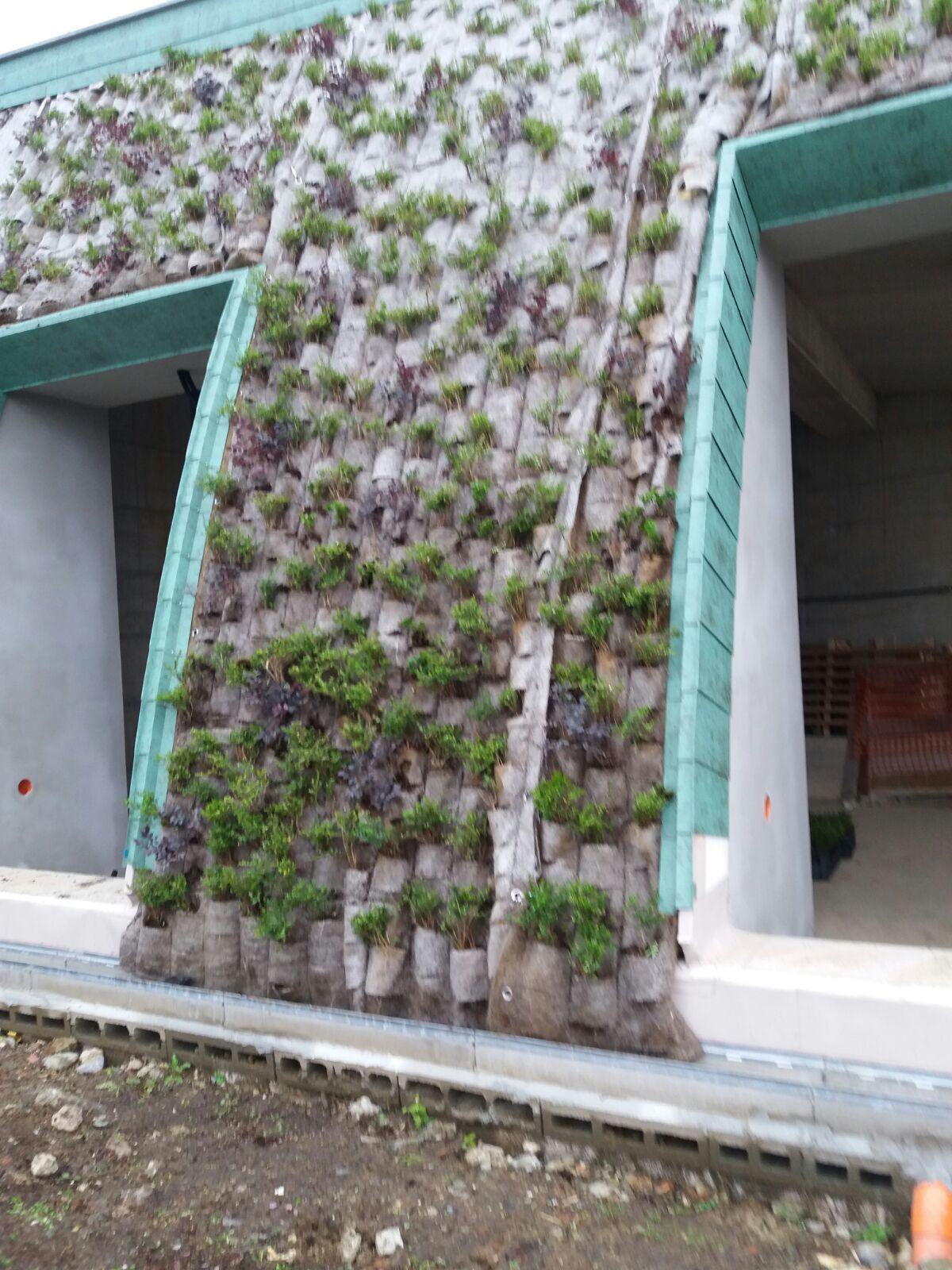 Progettazione e realizzazione giardini verticali 03