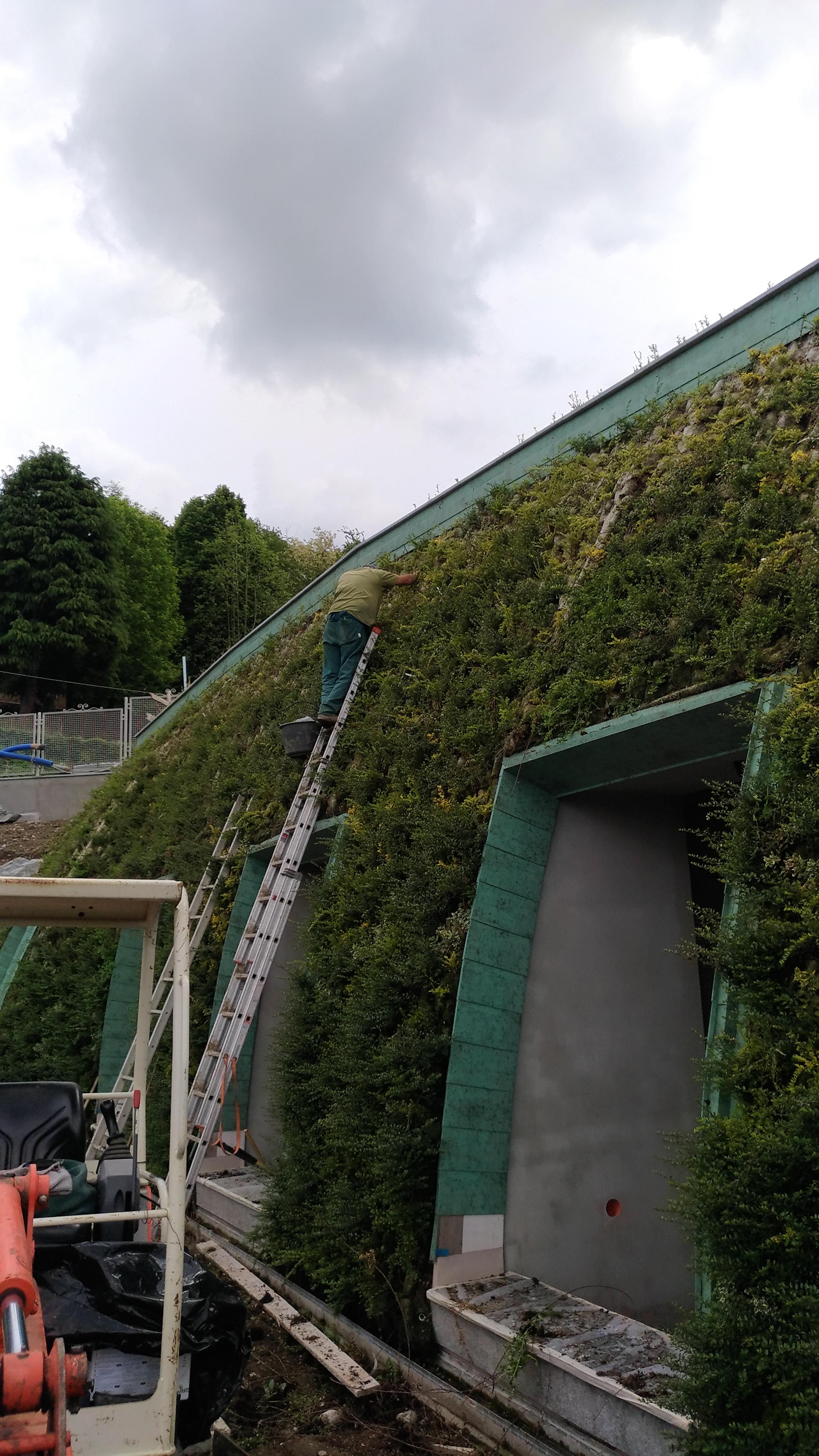 Manutenzione giardini verticali 05
